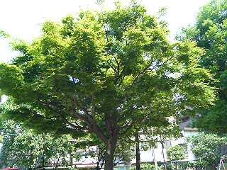 ♪この〜木なんの木?♪